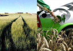 biofuel-grain